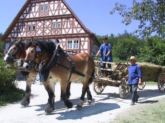 Tuttlingen, Niemcy: Pferdegespann am Fuhrmannstag