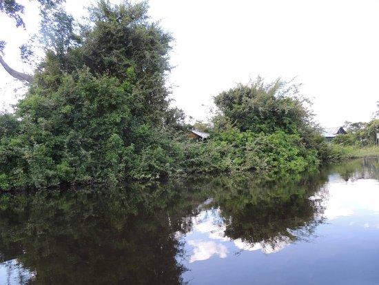 River Yacuma: Los bufeos nadan en medio de las copas de los árboles