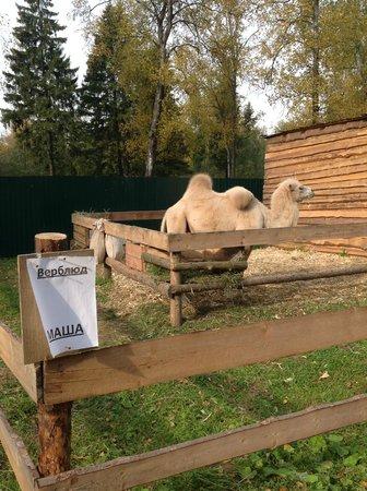 Zoo Park in Kostroma