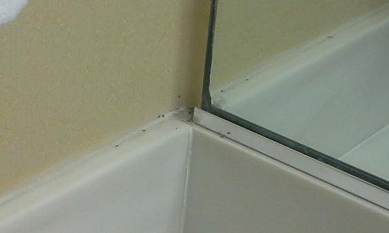 Anaheim Camelot Inn & Suites : Bugs in the bathroom