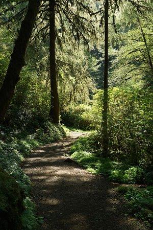 Munson Creek Falls trail