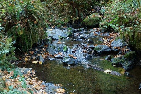 Munson Creek Falls : Rippling creek