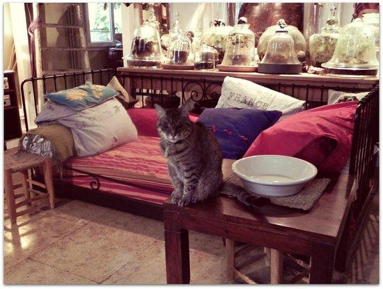 Chambre d'Autres et Suite du Merle Blanc: Alex's cat