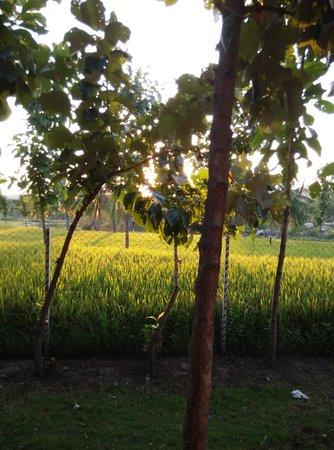 Shanthi Guesthouse: sunset