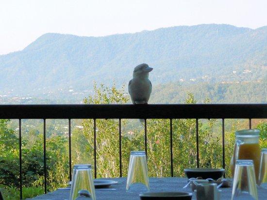 Kookas Bed & Breakfast: Breakfast with the kookaburra