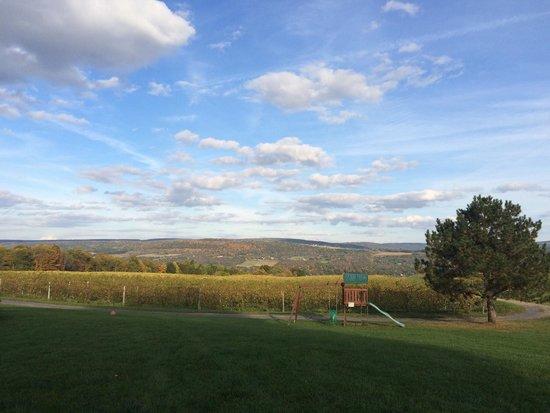 Lakewood Vineyards: Beautiful scenery!