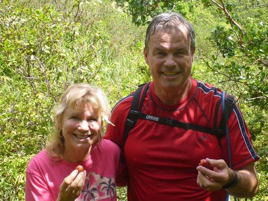 Maui Hiking Safaris Hiking Tours : Fresh strawberry guava.