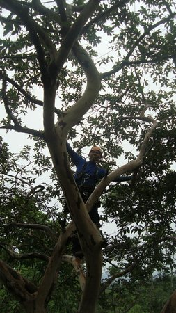 Arenal Mundo Aventura : Ulises picking fruit from the tree for us to snack on!