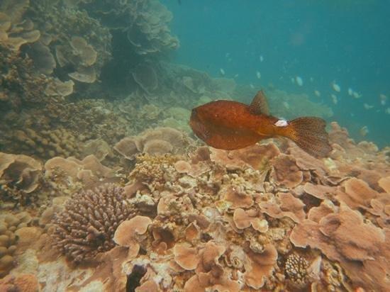 Pesce palla foto de fun island resort bodufinolhu for Pesce palla immagini