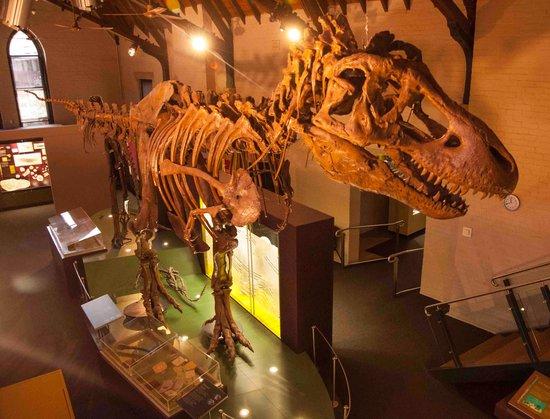 Bathurst, Australië: Tyrannosaurus 1