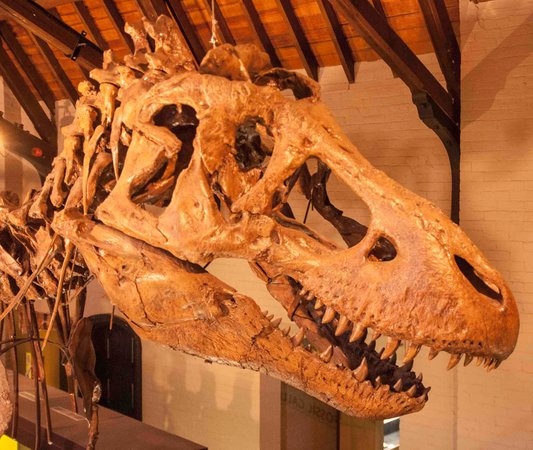 Bathurst, Australia: Tyrannosaurus head close up