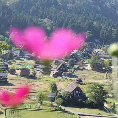 Isite Takayama - Day Tours : コスモスと