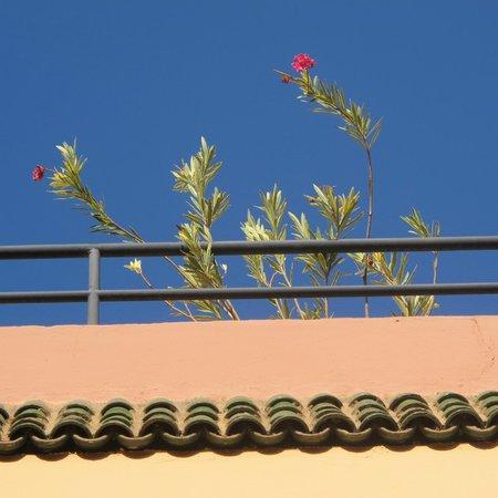 Riad Dalla Santa : le ciel bleu majorel