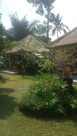 Suka's House Bed & Breakfast : Green garden
