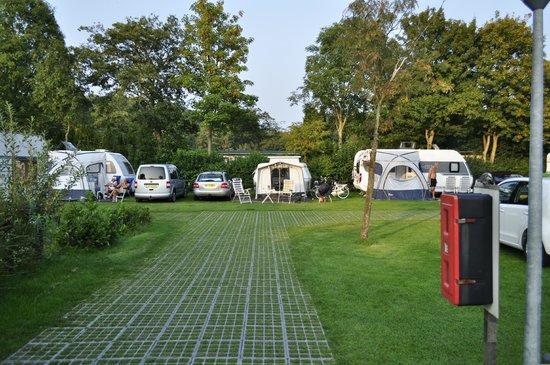 Delftse Hout camping