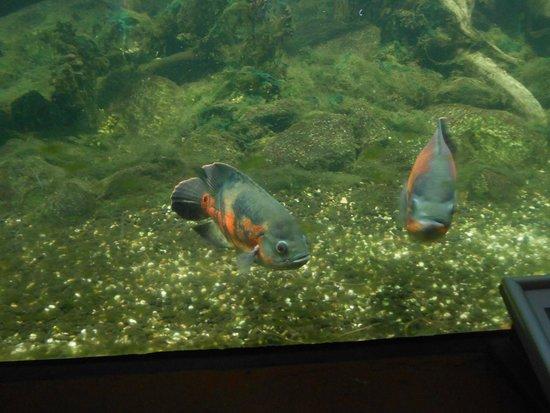 Fische bild von wilhelmshaven aquarium wilhelmshaven for Fische aquarium