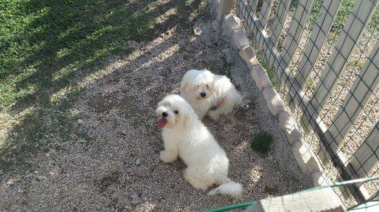 Mondragone, Italia: Allevamento dei cani di razza