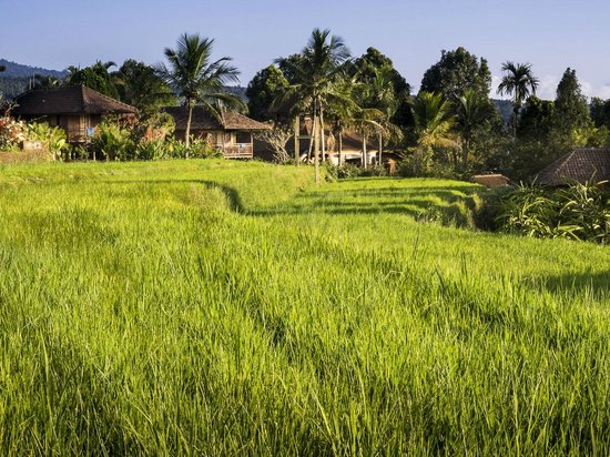 Puri Lumbung Cottages: Rice terraces on the grounds of Puri Lumbung Munduk Village