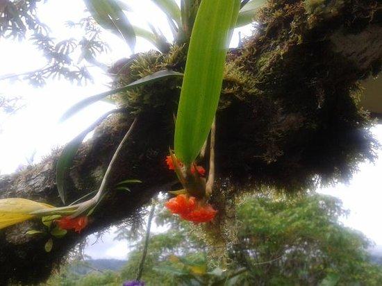 Casa Botania: Jardin muy lindo