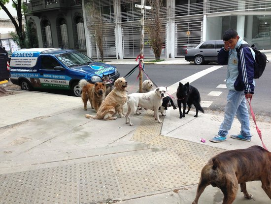 Palermo Place by P Hotels: Even the dogs in the neighborhood were friendly & well behaved -this group waits for their walk
