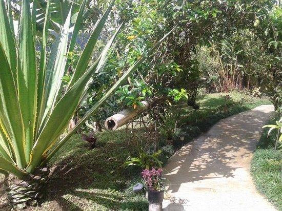 Casa Botania: Jardin