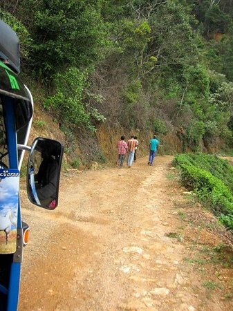 Hill Safari Eco Lodge Ohiya: the last 5 minutes of the trip to the hotel is on this road - what an adventure!