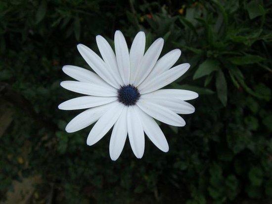 Hill Safari Eco Lodge Ohiya: Flower in house garden