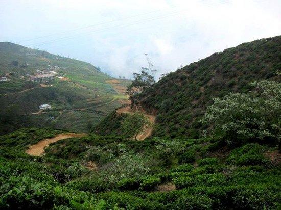 Hill Safari Eco Lodge Ohiya: Road to Hotel