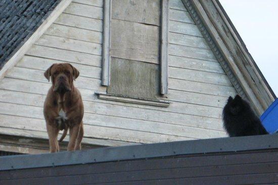 Concordia : Те самые собаки