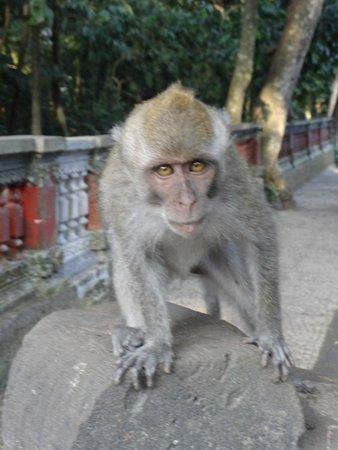 Magilla Bali Tours: Monkey Temple