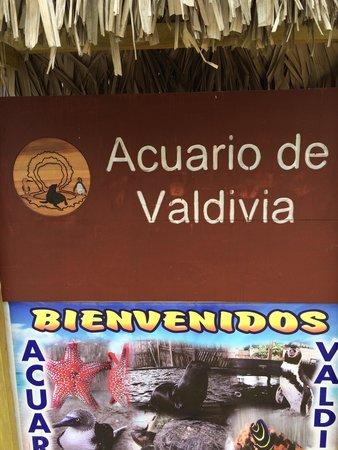 Acuario Valdivia