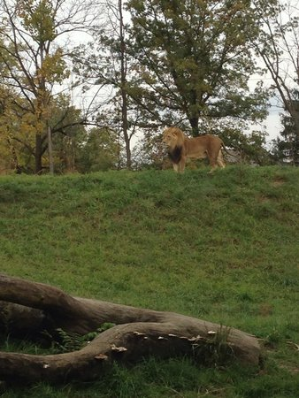 Fort Wayne Children's Zoo : Nice Fall day at the zoo!