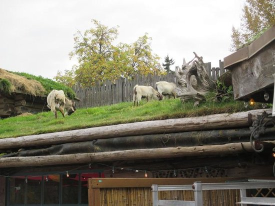 Goats On The Roof Picture Of Old Country Market Cafe