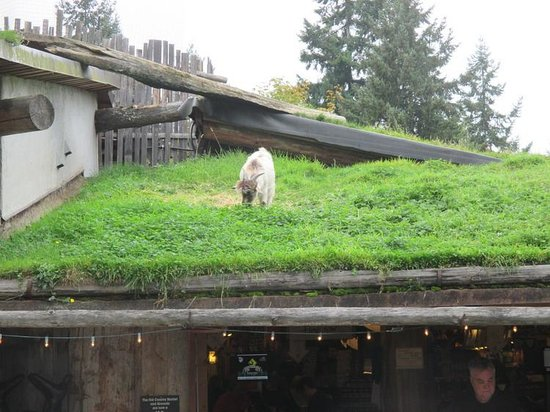 Goat 3 Picture Of Old Country Market Coombs Tripadvisor