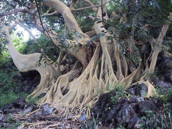 Mezcala Island: Hermosa vegetación