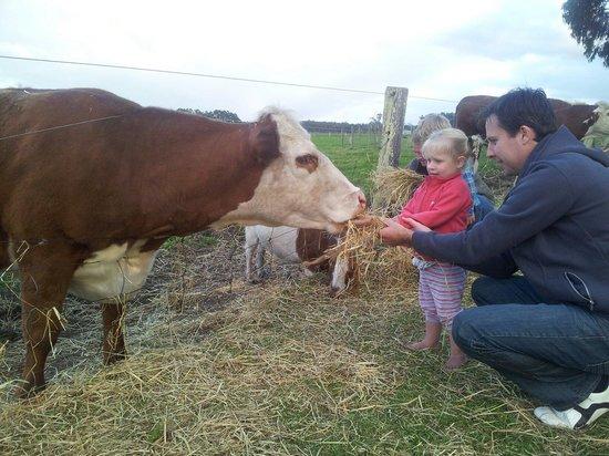 Taunton Farm Holiday Park : Feeding time