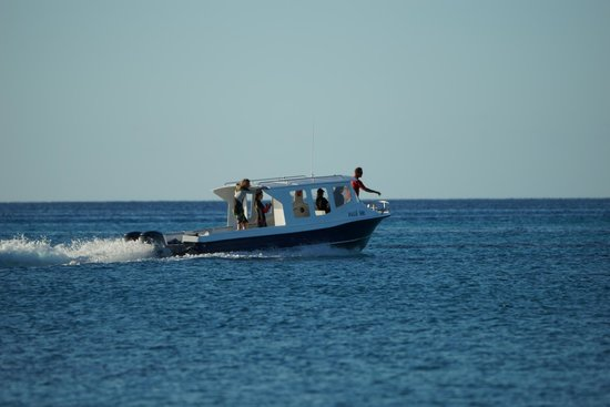 Matafonua Lodge: Dive Boat