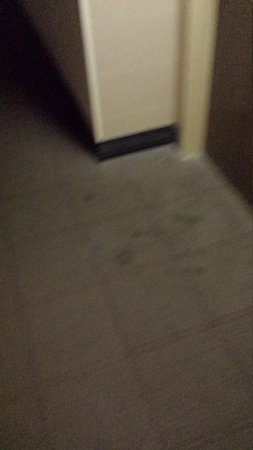 Sheraton West Des Moines Hotel : Hall carpet within 40 feet of our room - photo 2