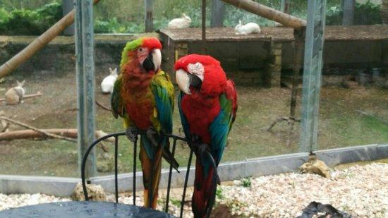 Quinta das Murtas: Papagaios