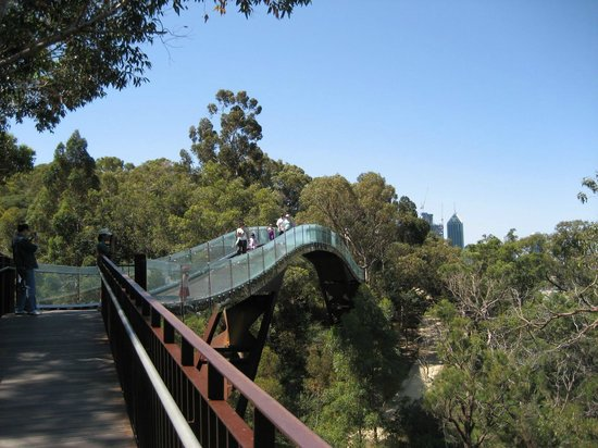 Kings Park U0026 Botanic Garden: Walking Bridge At Kings Park