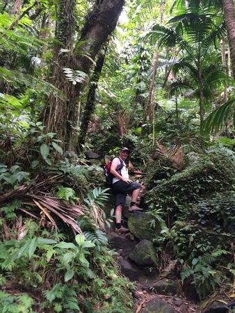 Poinciana Tours : The Trail Up