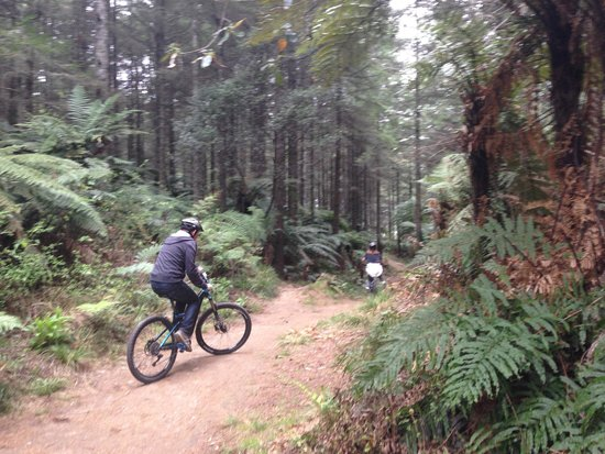 Mountain Bike Rotorua- Day Tours: Bike trails
