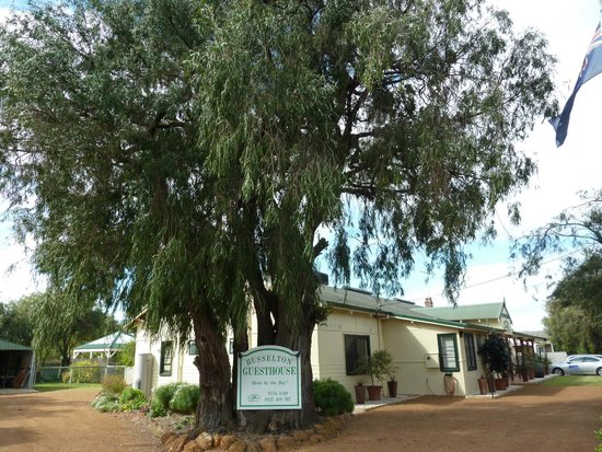 Busselton Guest House: Lovely, leafy peppermint trees abound