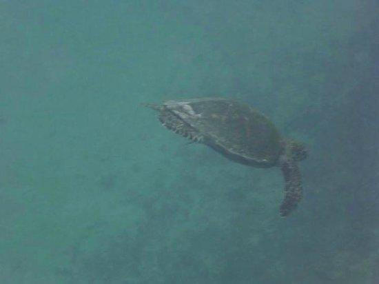 Kayak Nomad Polynesia : Meeresschildkröte