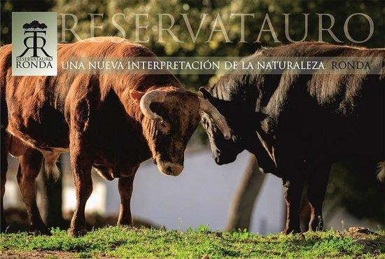 Resultado de imagen de Reservatauro