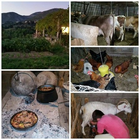 Apartments Kralj: Paulina and Miksa's beautiful farm