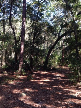 Jekyll Island Campground: Just steps from site