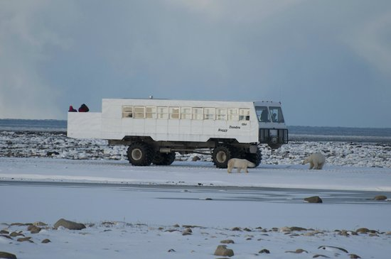 The Tundra Buggy Adventure - Day Tours: Tundra Buggy and Bears