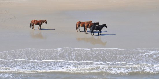 Coastal Helicopters: Wild Horses on the Beach