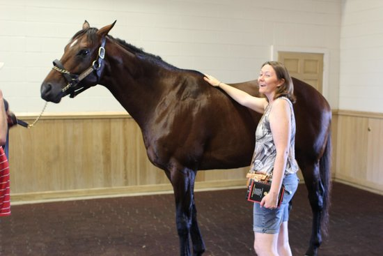 UnBridled Horse Tours: one TALL stallion